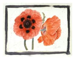 Red Poppies // Gertrude Hamilton: Gertrude Hamilton, Tiger Power, Red Poppies