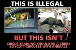 RINGLING BROS. CIRCUS ARE THE LARGEST ANIMAL CRUELTY CRIMINALS IN U.S.!! PLEASE SIGN & SHARE! https://secure.peta.org/site/Advocacy?cmd=display=UserAction=3192: Vegan, Animals, Animal Circuses, Animal Rights, Voice, Animal Cruelty, Animal Abuse Cruelt