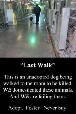 Save a life...adopt!  This is heartbreaking!!!!: Animals, Dogs, Animal Rights, Walks, Animal Cruelty, Pet, Animal Abuse