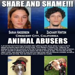 Share share and SHARE again please, let's make sure this hideous people never hurt an animal again!: Animal Voices, Abused Animals, Animal Rights, Animal Cruelty, Dog, People, Cats Other Animals