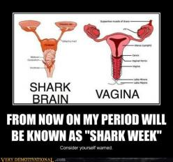 Shark Brain compared to a Vagina.  Oh the things you learn in Animal Biology!: Giggle, Laughs, Quotes, Funny Stuff, Funnies, Humor, Sharks, Shark Week