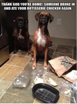 Sneaky boxers: Animals, Dogs, Boxer, Funny Stuff, Funnies, Humor, Funny Animal