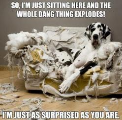 So, I'm just sittin' here and the whole damn couch exploded! I'm just as surprised as you are!!: Animals, Dogs, Pet, Funny Stuff, Funnies, Humor