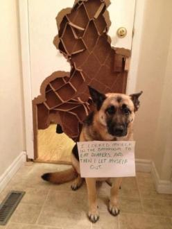 So that's what the inside of a door looks like! The Best of Dog Shaming - Part 16 | Little White Lion: Dog Shame, Dog Shaming, White Lion, Bad Dog, Pet, German Shepherd, Animal
