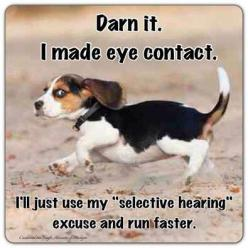 """SO true! If you make eye contact with your beagle when trying to retrieve them whilst out for a walk, you're screwed! .... They'll think """"Ah, the human knows where I am, I'll do whatever I like"""" :-Y: Beagle Puppy, Animals, Dogs, Beagle"""