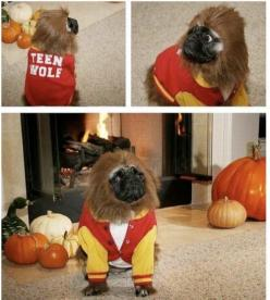 spaceghetto (pug,teen wolf,funny,costumes,halloween): Halloween Costume, Teenwolf, Wolves, Pugs, Teens, Dog, Wolf Pug, Animal, Teen Wolf
