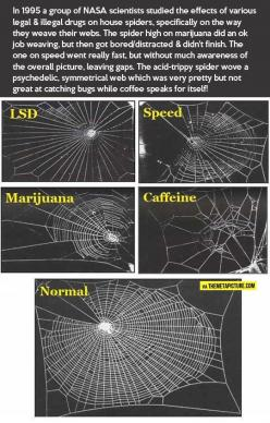 Spiders out of control… || saw this in (I think?) my college psychology text and often think of it re: caffeine addiction.  Still drink my coffee though. :): Spiders, Caffeine, Stuff, Drugs, Nasa Scientists, Funny, Science