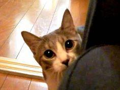 Stalking Cat - I laughed out loud almost the entire video! It's short, so you can take the time to watch it and get a good laugh! >^..^
