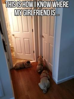 @Stephanie Close Close Armstrong hahahaha this will be you and Jesse with three little pugs! Haha: Animals, Dogs, Girlfriend, Funny, So True, Pugs, Funnies
