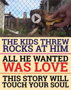 Such a moving story! Oh my goodness I cried so much... What a beautiful story I would so adopt if possible...: Rescue Pitbull, Bully Pitbull, Moving Story, Animal Video