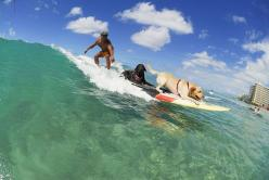 Surfing Dogs by Ohana Beach Rentals Hawaii: Beach Dogs Pool, Surfing Dogs, Style Dogs, Rentals Hawaii, Dogs Hawaii, Ohana Beach, Beach Rentals, Animal