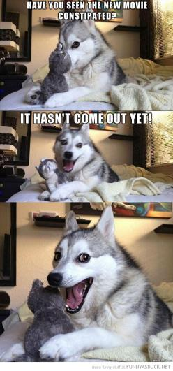 Teehee!: Giggle, Animals, Dogs, Funny Stuff, Funnies, Humor
