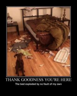 Thank goodness you're here: Funny Animals, Dogs, Pet, Funny Stuff, Bed Exploded, Funnies, Goodness You Re