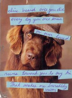 that's my kinda heaven. i hope this is true! for the people who have loved and lost their dogs!: Doggie, Dogs, Post Secret, Quote, Pet, Incredibly Happy, Postsecret, Animal