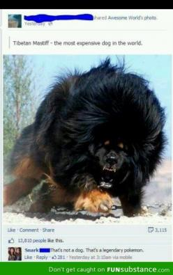 That's not a dog. That's a legendary pokémon.: Expensive Dog, Animals, Dogs, Pets, Tibetan Mastiff, Most Expensive, Tibetanmastiff