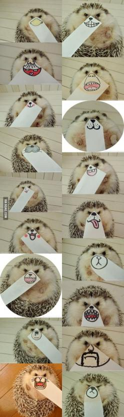The Faces Of This Hedgehog Are The Best Things: Hedge Hog, Animals, Cute Hedgehog, The Face, Pet, Hedgehog Faces, Hedgehogs