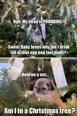 The fun part of being perpetually sober is that I get to laugh at all of you people who have moments like this.: Animals, Sweet Baby, Funny Stuff, Humor, Funnies, Pugs, Dog, Christmas Trees