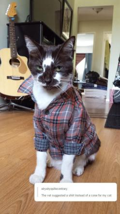 """The look on that cat's face!  """"This may be funny now, human... but it won't be funny when I END you."""": Cats Wear, Kitty Cats, Wear Baby, Animals, Shirts, Things, Baby Sizes"""