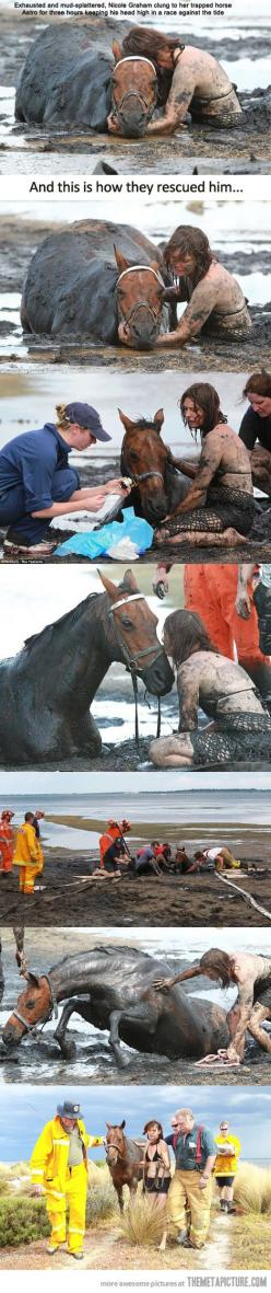 The original pin only showed her holding his head up.  I am so glad this story has a happy ending.: Restores Faith, Animal Rescue, Humanity Restored, Horses ️, Faith In Humanity, Horse Girl, Girl Restores, Happy Endings