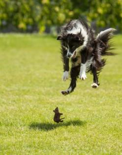 The perfectly timed mouse being a hero photo: | The 27 Most Perfectly Timed Photos Of The Year: Mice, Animals, Dogs, Border Collie, Pet, Funny Stuff, Funny Animal, Photo