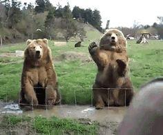 These bears also waving back. | 20 Bears Who Think They're People