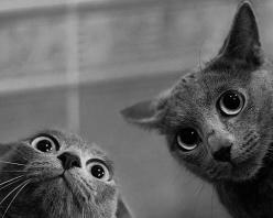 They are up to something.: Cats, Animals, Funny Cat, Pet, Crazy Cat, Funnies, Kitty, Eye