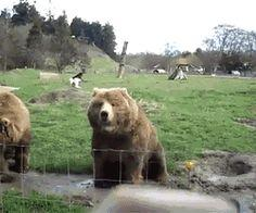 This bear that knows it's rude to not wave good-bye: | 17 Polite Animals That Have Better Manners Than You