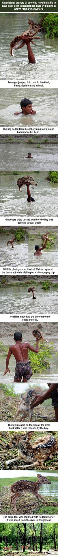This boy risked his own life to save a baby deer: Restore Your Faith In Humanity, Baby Deer, Faith Restored In Humanity, Hero, Faith In Humanity Restored, Animal Stories, Amazing People, Boy, Human Kindness