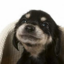 this guy needs some snuggles: Face, Puppy Smile, Animals, Cute Puppies, Dogs, Sweet, Guy, Box Market, Adorable