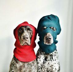 This is a christmas holdup!  two German shorthaired pointers