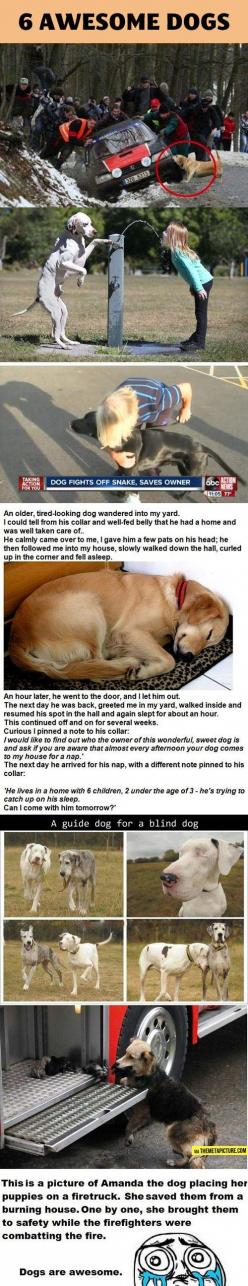 this is adorable: Doggie, Awesome Dogs, Animals, Pet, Amazing Dogs, Heart Warming, Puppys, Friend