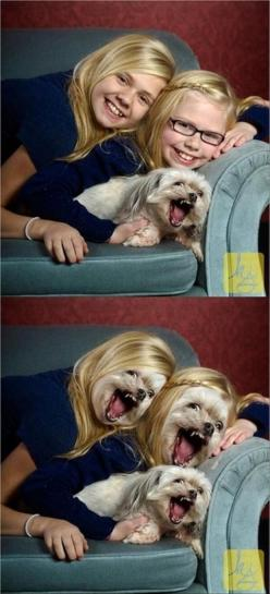 This is one of the rare times when I actually did laugh out loud when I saw this..: Giggle, Face Swaps, Funny Stuff, Funnies, Humor, So Funny, Dog