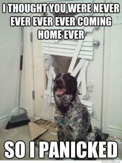 This is totally my dogs...: Animals, Dogs, Pets, Funny Stuff, Humor, Funnies, Funny Animal, Things
