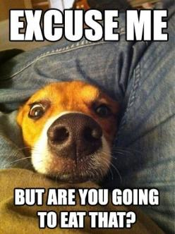 This looks and sounds just like my Riley girl! LOL: Animals, Dogs, Excuse Me, Pet, Funnies, Puppy, Beagle, Funny Animal