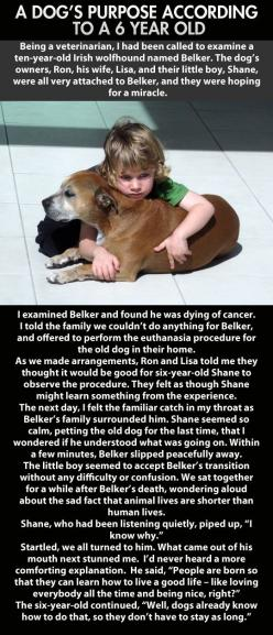 This made me cry ;(: Animals, Sweet, Dog S Purpose, Dogs, Quotes, Pet, So True, Kid