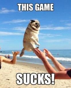 This made me laugh so much: Animals, Dogs, Funny Pictures, Pug Life, Pugs, Funnies, Game Sucks, Funny Animal