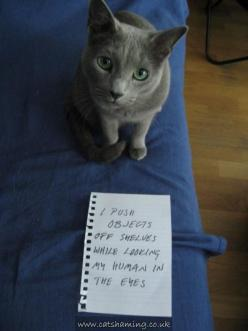 This not only looks like Oscar, but he does this very thing constantly!  The best of cat shaming - Part 2 - Little White Lion: Animals, Catshaming, Funny, Cat Shaming, Crazy Cat, Animal Shaming, Kitty, Cat Lady, Pet Shaming