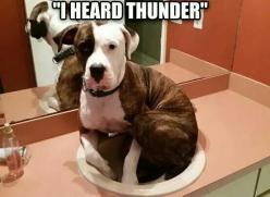 This reminds me of Layla.: Cat, Animals, Dogs, Heard Thunder, Pet, Funnies, Funny Animal