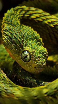 This snakes scales look like tiny trees all overlapping to create a jagged texture.: Serpent, Reptiles, Animals, Nature, Beautiful Snakes, Creature, Bush Viper, Color