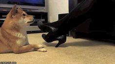 This total copycat. | 50 Of The Most Important Dog GIFs Of All Time