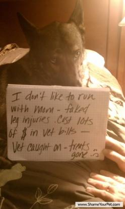 this will prob be my dog one day, one of the reasons i want one!: Animals, Dog Shame, Dog Shaming, Pet, Funny