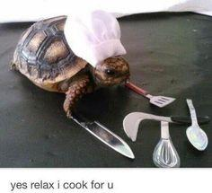 Tiny Turtle Chef!