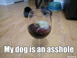 Too funny: Wine, Giggle, Dogs, Asshole, Funny Pictures, Funny Stuff, Humor, Funnies, Animal