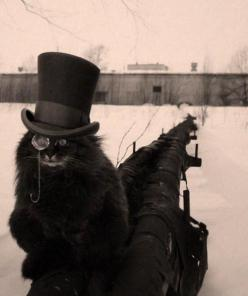 tumblr_m8mayb7E381r3a6jho1_500.jpg (500×596): Animals, Cupcake, Quotes, Black Cats, Steam Punk, Steampunk Cat, Top Hats, Kitty, Photo