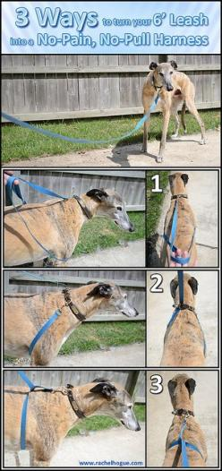 Turn Your Leash Into a No-Pull Harness (view full size) by rachelhogue, via Flickr: Doggie, Dogs, Dog S Chest, Dog Training, Photo Sharing, Dog Stuff, No Pull Harness, Animal