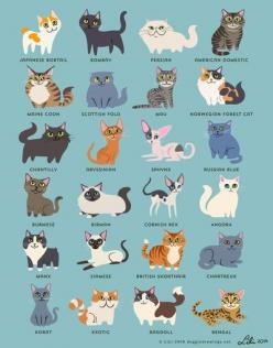 Twenty-four cats to get your day started *reyet* (said crisply)...: Cat Art Print, Cats, Artprint, Art Prints, Doggiedrawings, Animal