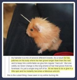 Unicorn hamster. | 23 Of The Cutest Things That Have Ever Happened On Tumblr: Animals, Funny, Hamsters, Fabulous Unicorn, Hamster Unicorn, Unicorns, Unicorn Hamster