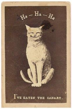 victoriasrustyknickers:    You don't say…  Late 19th century Carte de Visite from the US: Cats, Stuff, Art, Illustration, Funny, Canary, Has Been, Vintage Cat, Animal