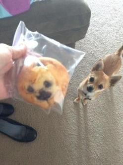 We can't decide if this muffin looks like a dog- YES, it does!: Animals, Dogs, Blueberries Muffins, Funny Stuff, Humor, Funnies, Chihuahua