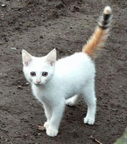 Whoa...check it out!  I traded tails with a kid on the school bus.  Do you think Mom will notice?: Cats, Animals, Funny, Kittens, Feline, Kitty, Cat Lady, White Cat